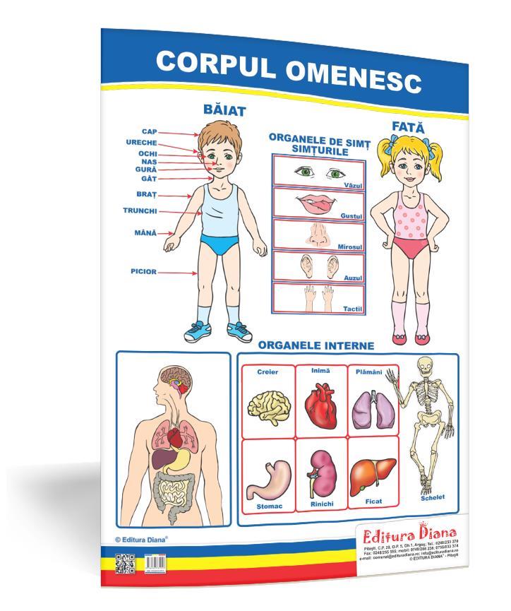 Corpul omenesc - planșă 50x70 - Proiecte Tematice imagine edituradiana.ro