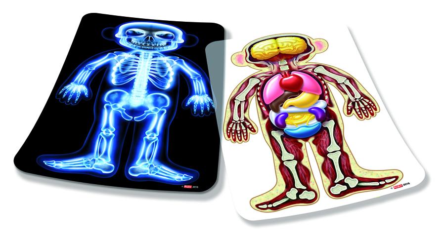 Corpul uman imagine edituradiana.ro
