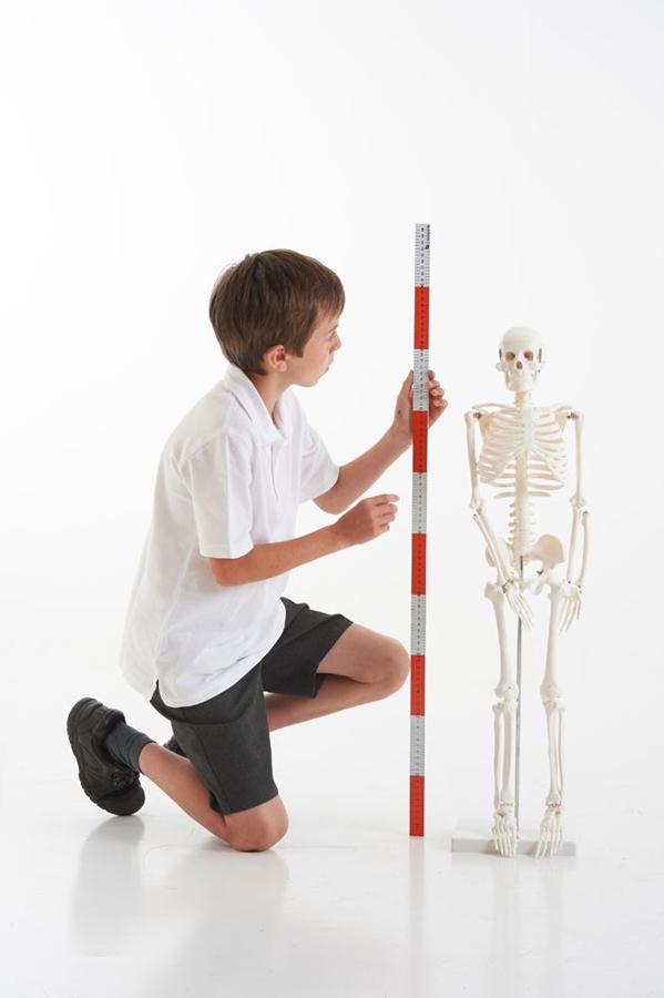 Mini schelet uman imagine edituradiana.ro