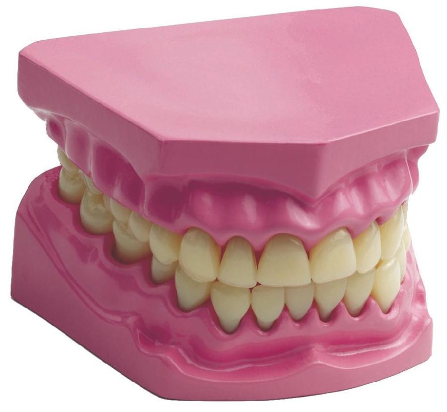 Set dentar demonstrativ imagine edituradiana.ro