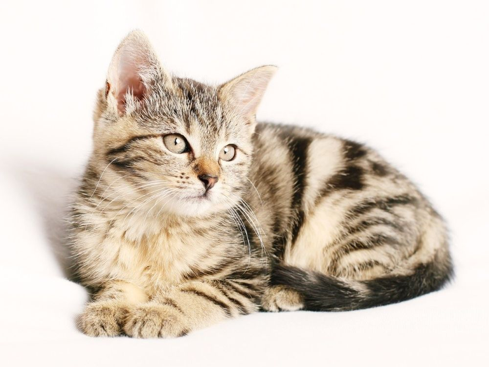 Site- ul dating pisici