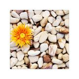 Piatra decorativa galbena 4-8