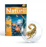 Minunile Naturii - Nr. 01: Scorpionul Manciurian