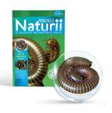 Minunile Naturii - Nr. 14: Miriapodul dungat