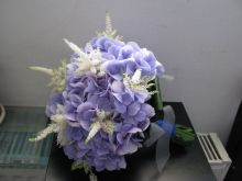 Hortensia blu