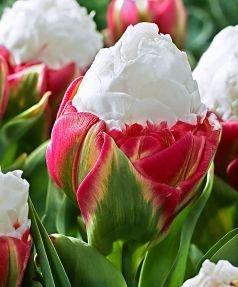 Lalele Ice cream (Tulips Ice cream)
