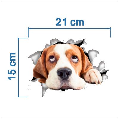 Sticker decorativ Here I am - Beagle 21 x 15 cm