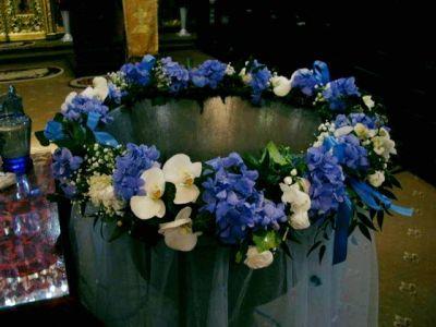 Big Blu Hortensia
