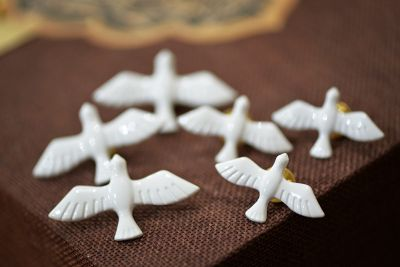 Brosa porumbei Pigeon