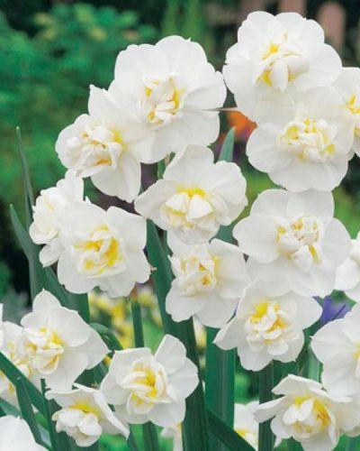 Narcise - Cheerfulness